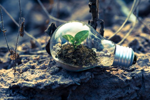 Greenery growing inside a light bulb, green ideas